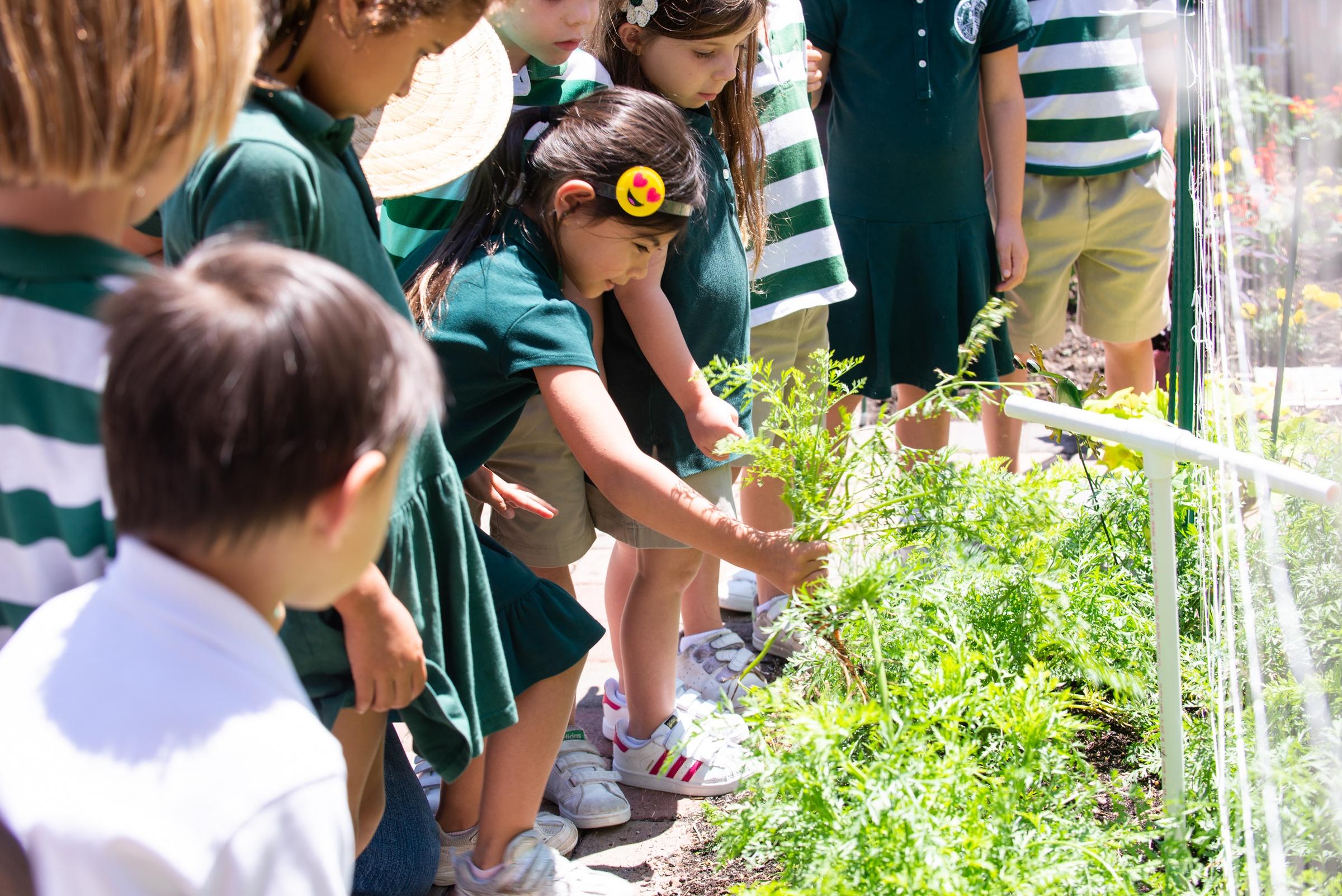 Pre-kindergarten in the organic garden