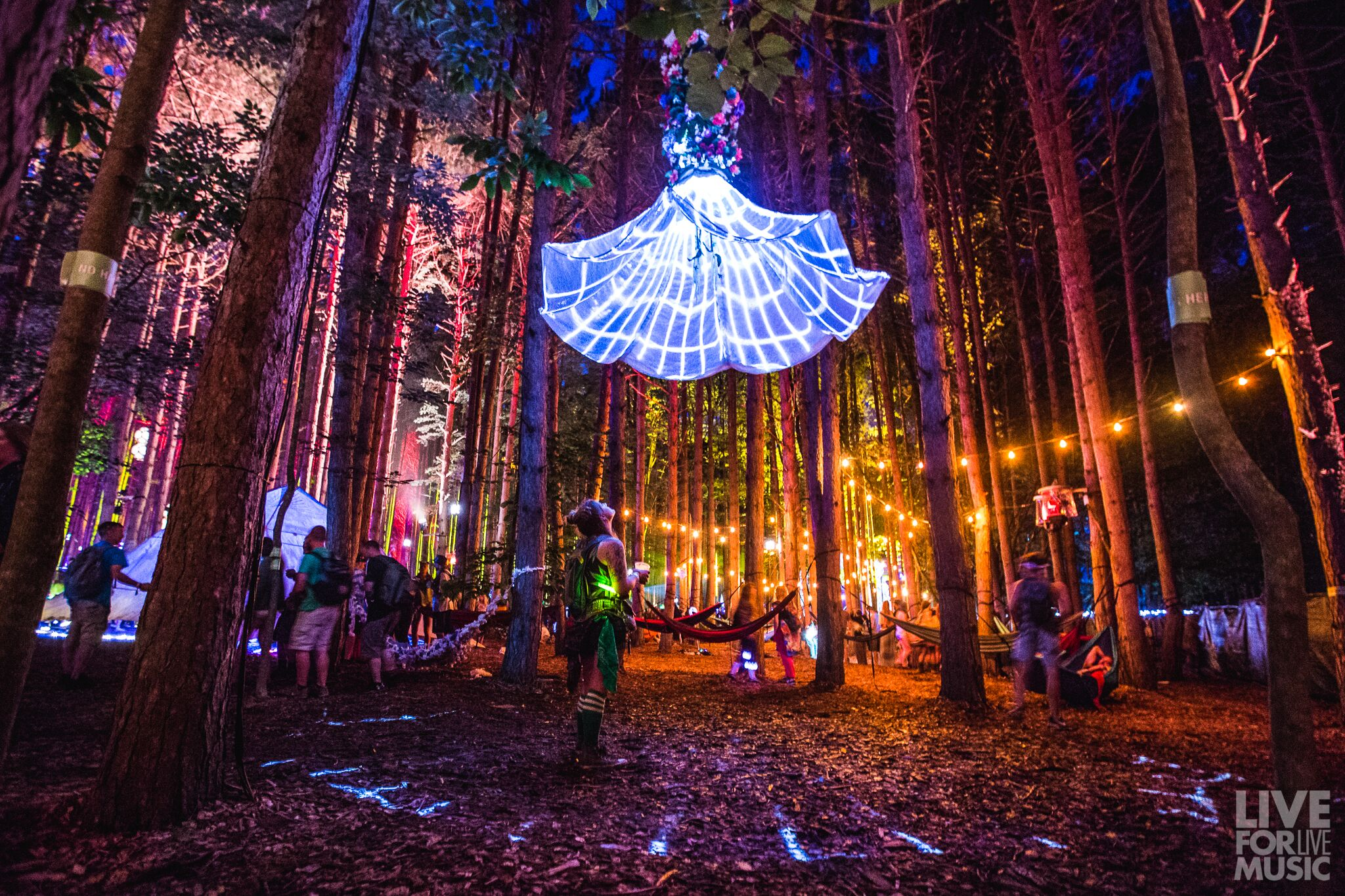 Night Lily at Electric Forest